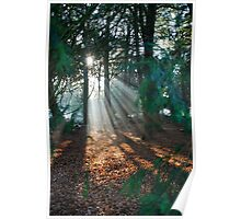Light Streaming through the trees Poster