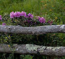 Rhodo-N-Rails by Forrest Tainio