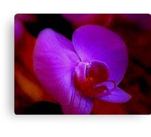 Purple Passion ^ Canvas Print