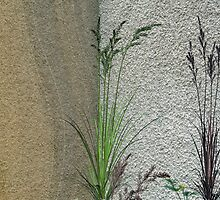Grass on Wall  by Elaine  Manley