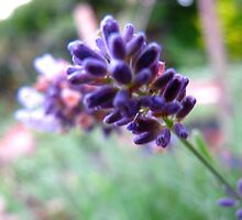 The Lavender wand by MarianBendeth