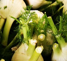 Fennel by chrstnes73