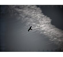 Of Kites and Chemtrails II Photographic Print