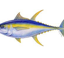 Yellowfin Tuna (Thunnus albacares) by Tamara Clark
