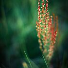 Crimson Grass by Zach Pezzillo