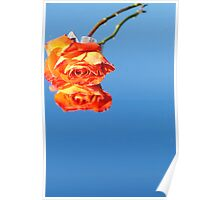 Wilting Reflection Poster