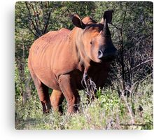 South Africa Menagerie - Rhino Canvas Print
