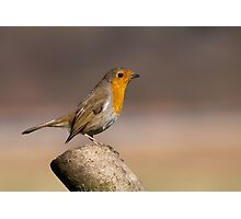Robin Red Breast Photographic Print