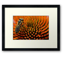 Bee on Echinacea Framed Print