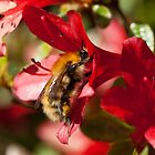 Busy Bee! by Margaret S Sweeny