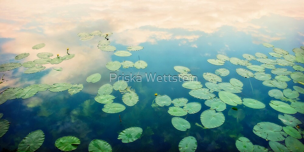 waterlilies home by Priska Wettstein