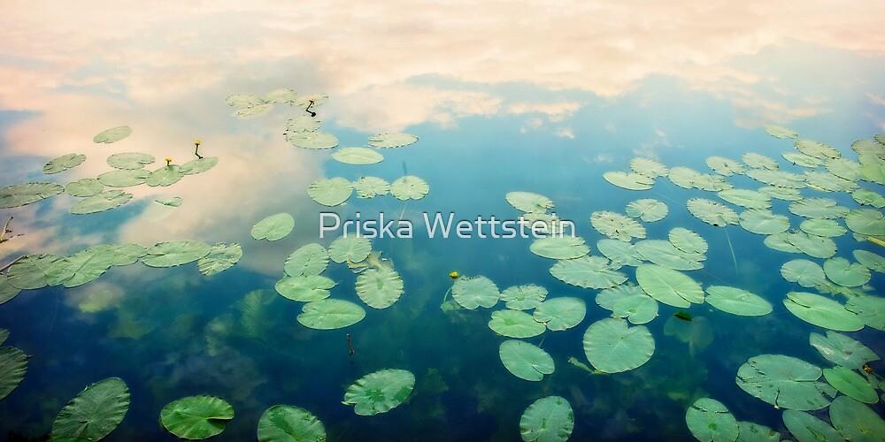 waterlilies home by Priska Wettstein
