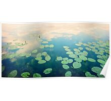 waterlilies home Poster