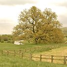 Northumberland by Mishka Góra