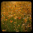 TTV-WATER COLOR FLOWER. by mikepemberton