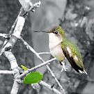 Sweet Little Hummingbird by Caren