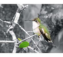 Sweet Little Hummingbird Photographic Print