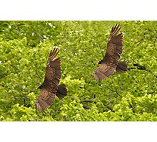 Turkey Vultures Photographic Print