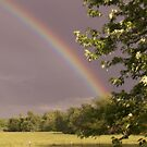 rainbow 2 by pictureman65622