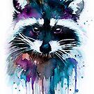 Raccoon  by Slaveika Aladjova