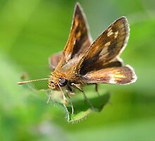 Nothing But Skippers! by William Brennan