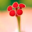 Hibiscus Stigma detail by Melissa Fiene