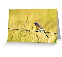 Bluebird on a Wire Greeting Card