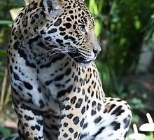 Jaguar by Mark Anderson