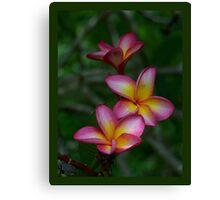 Hawaiian Sunset FrangipaniI - Colour of Passion Canvas Print