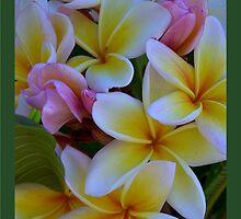 Fruit Salad Frangipani - Nice an Sweet by jono johnson