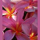 Candy Pink Frangipani - Antiquity by jono johnson