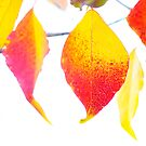 autumn leaves by nadine henley