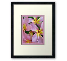 Candy Pink Frangipani - Femininity Framed Print