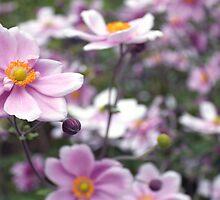 Pretty by Margi