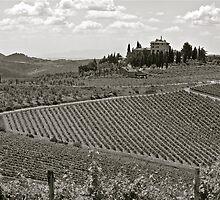 Vineyards of Tuscany by Neil Clarke