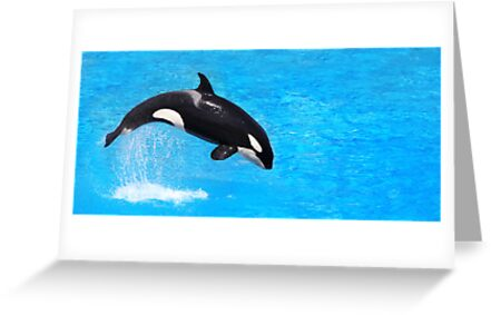 Orca by Jem Wright