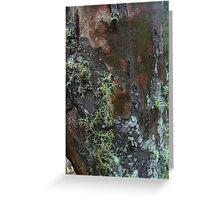 Lichen on black sallee bark Greeting Card