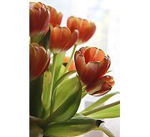 My Tulips Photographic Print