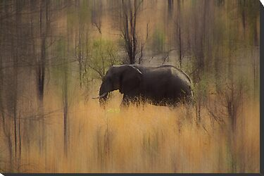 The African Elephant on the Move by Peter Zentjens