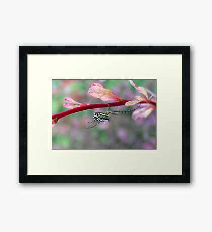 It's What Spider's Do Framed Print