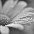 Rainy day... by MarieG