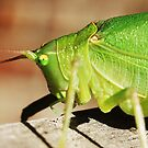 Katydid on porch by SusieG