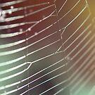 Rainbow Web by babibell