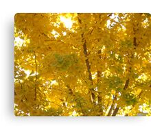 Beautiful Yellow Canvas Print