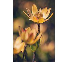 Golden Flowers Photographic Print