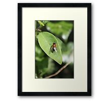 A close up of a fly resting on a leaf Framed Print