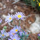 Tiny Violet flowers by MDR-Design