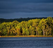 Light on the Trees by KellyHeaton