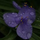 Purple Rain by Renee Blake