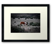 Peppercorn Brumby Framed Print